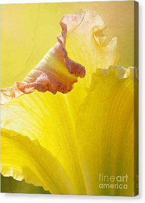Canvas Print featuring the photograph Ruffles Have Ridges by Kathi Mirto