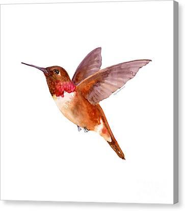 Fall Canvas Print - Rufous Hummingbird by Amy Kirkpatrick