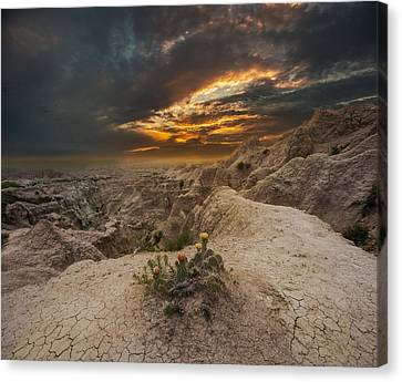Rugged Beauty Canvas Print by Aaron J Groen