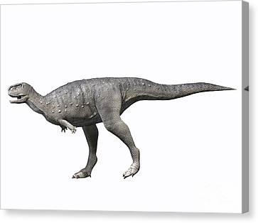 Rugops Primus, Late Cretaceous Of Niger Canvas Print by Nobumichi Tamara