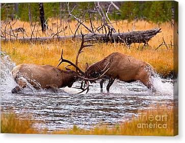 Rumble In The River Canvas Print by Aaron Whittemore
