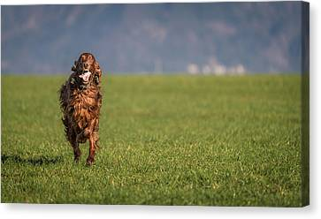 Run Allegro Run Canvas Print