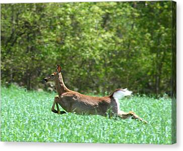 Run Forest Run Canvas Print by Neal Eslinger