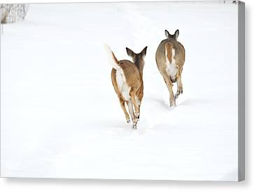 Canvas Print featuring the photograph Run Forrest Run by Dacia Doroff