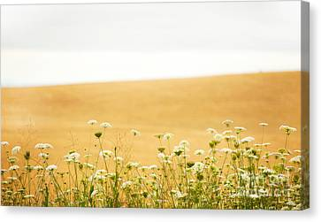 Run With Me Through A Field Of Wild Flowers Canvas Print by Artist and Photographer Laura Wrede