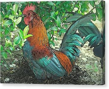Runaway Rooster Canvas Print by Carol Groenen