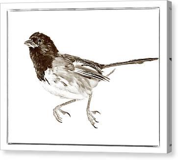 Running Bird Canvas Print by Susan Leggett