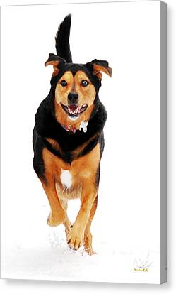Doggy Cards Canvas Print - Running Dog Art by Christina Rollo