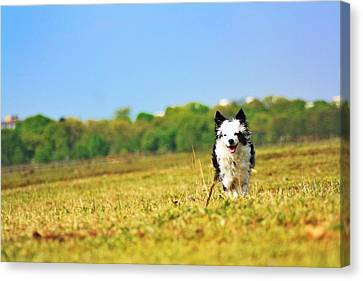 Running Dog Canvas Print by Daniel Precht