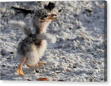 Running Free - Least Tern Canvas Print by Meg Rousher