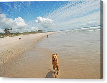 Canvas Print featuring the photograph Running Free 3 by Ankya Klay