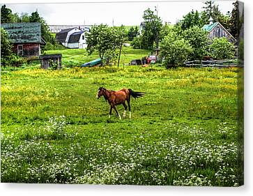 Running Free Canvas Print by Gary Smith