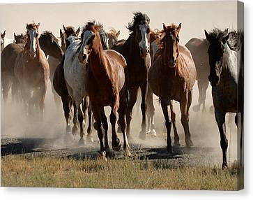 Running Free Canvas Print by Lee Raine