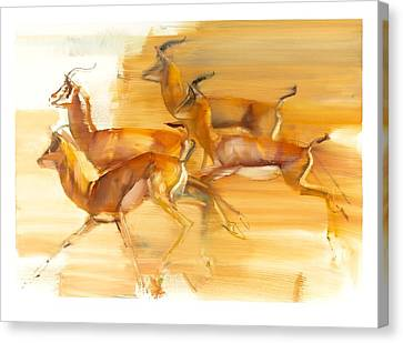Running Gazelles Canvas Print by Mark Adlington