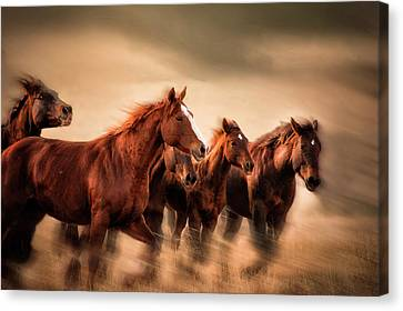 Running Horses, Blur And Flying Manes Canvas Print