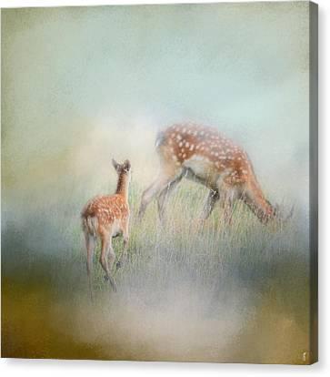 Running To Papa - Baby Deer Canvas Print