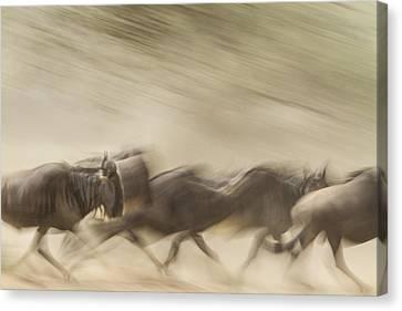 Running Wildebeest I Canvas Print