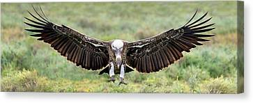 Ruppells Griffon Vulture Gyps Canvas Print by Panoramic Images