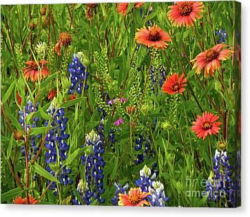 Rural Color Canvas Print by Joe Jake Pratt