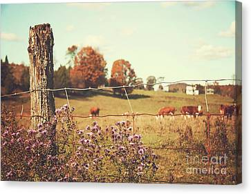 Rural Country Scene Canvas Print by Sandra Cunningham