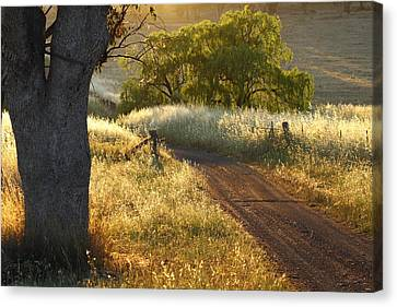 Rural Road 2am-009691 Canvas Print by Andrew McInnes