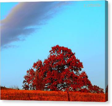 Rural Route Canvas Print by Chris Berry