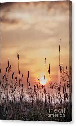 Rural Sunset Canvas Print by Jan Bickerton