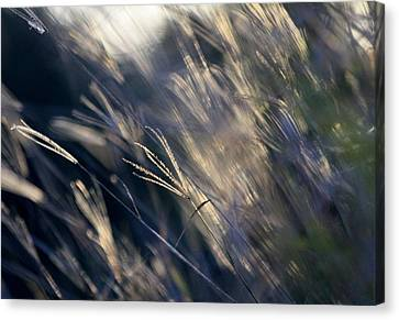 Rush Hour Canvas Print by Debbie Howden