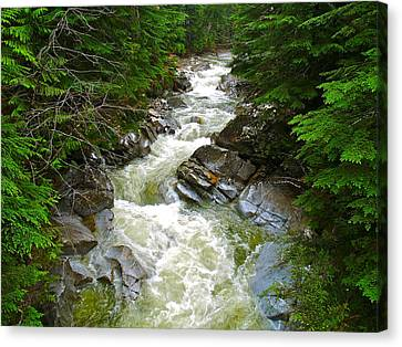 Rushing Stream Canvas Print by Susan Crossman Buscho