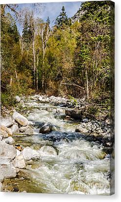 Rushing Water Canvas Print by Sue Smith