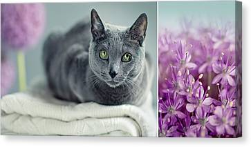 Russian Blue Collage Canvas Print by Nailia Schwarz