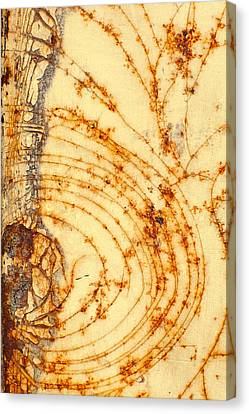 Rusted Web Canvas Print by Rebecca Skinner