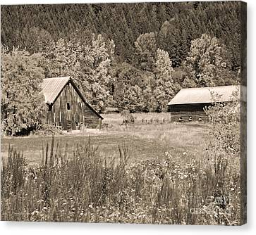 Rustic Beauty In Sepia Canvas Print by Connie Fox