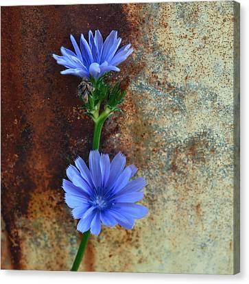 Rustic Bloom Canvas Print by Tom Druin