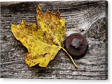 Rustic Leaf Canvas Print