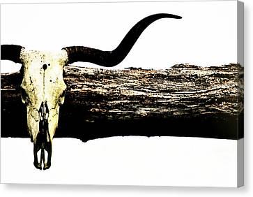 Rustic Longhorn Canvas Print by Chastity Hoff