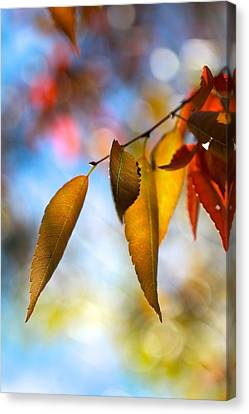 Rustling Leaves Canvas Print by Tracy Male