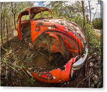 Rusty Beetle Canvas Print by Carl Engman