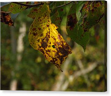 Canvas Print featuring the photograph Rusty Leaf by Nick Kirby