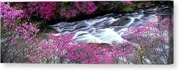 Ryuzu Falls Tochigi Japan Canvas Print by Panoramic Images