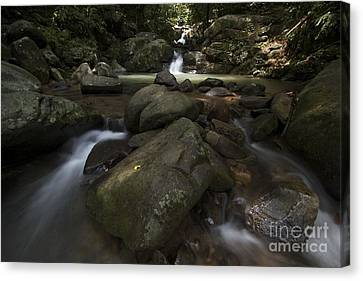 Canvas Print featuring the photograph Sabah Nature by Gary Bridger