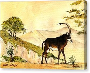 Sable Antelope Canvas Print