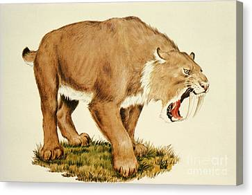 Sabretooth Cat Canvas Print by Tom McHugh