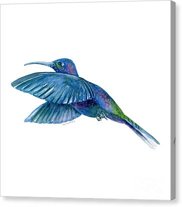 White Birds Canvas Print - Sabrewing Hummingbird by Amy Kirkpatrick