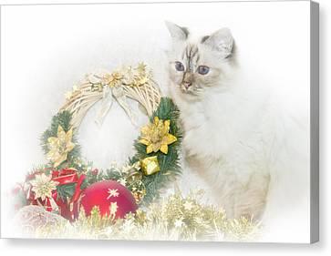 Sacred Cat Of Burma Christmas Time Canvas Print by Melanie Viola