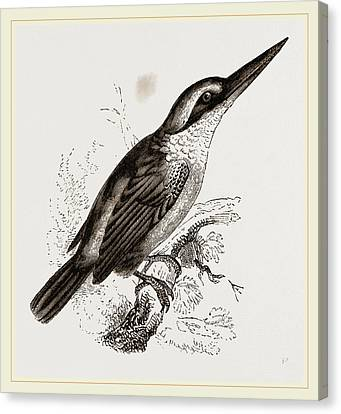 Sacred Kingfisher Canvas Print by Litz Collection