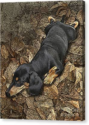 Sad Murphy Canvas Print by Judy Wood