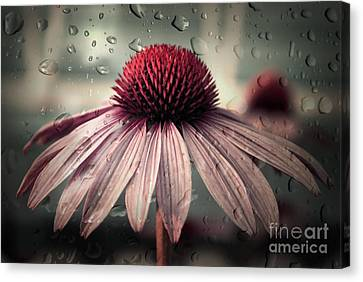Glass Canvas Print - Sad Solitude by Aimelle
