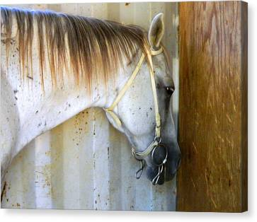 Canvas Print featuring the photograph Saddle Break by Kathy Barney