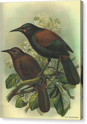 Audubon Canvas Print - Saddleback by Dreyer Wildlife Print Collections
